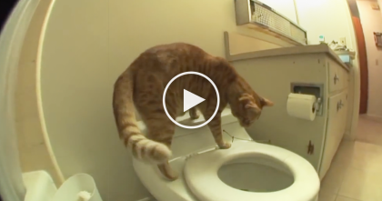Cat Sits On Toilet And Knows Just What To Do… Totally Awesome, You've Gotta See This Video!