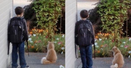 Boy Waits Every Day For The School Bus, But When You See What The Cat Does…Your Heart Will Melt!!