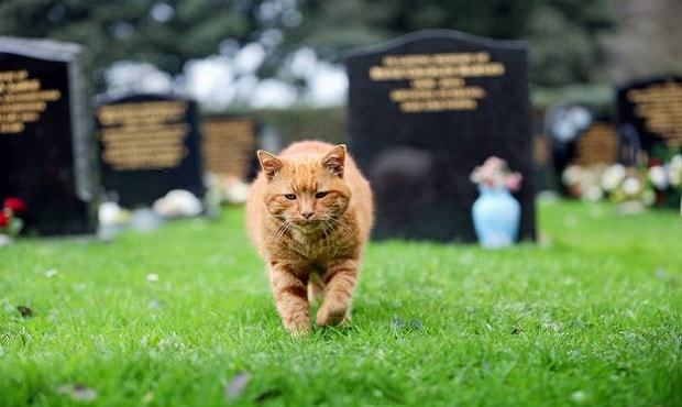 cemetery-cat-named-barney-who-has-comforted-mourners-for-over-20-years-has-died-but-now-4