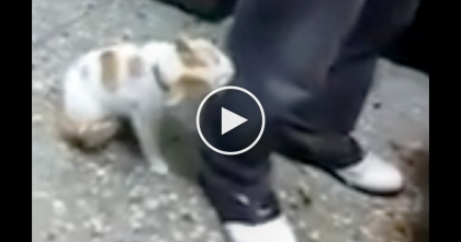 Guy Is Talking Rudely And Threatening Someone, But When The Cat Sees His Owner, Now Watch…