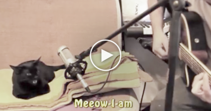 He Starts Signing A Song, But Then… Now Listen To What The Cat Does, This Is Adorable, LOL!