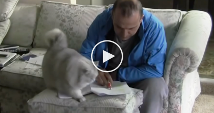 He's Trying To Get Some Work Done, But Then This Fluffy Cat Notices… Just WATCH, It's ALL Over!!
