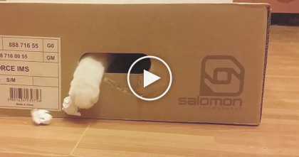 He Throws Paper Balls At The Box, But Watch What Kitty Does Next… This Hilarious, and TOO Cute!!