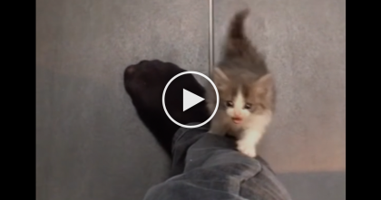 Kitten Wants Attention, But Just Watch What He Does… OMG, This Is The Cutest Reaction Ever!!
