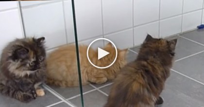 Kittens Discover A Toy Bug, But The Results Are Pure Adorable… Just Watch Their Reaction, OMG!