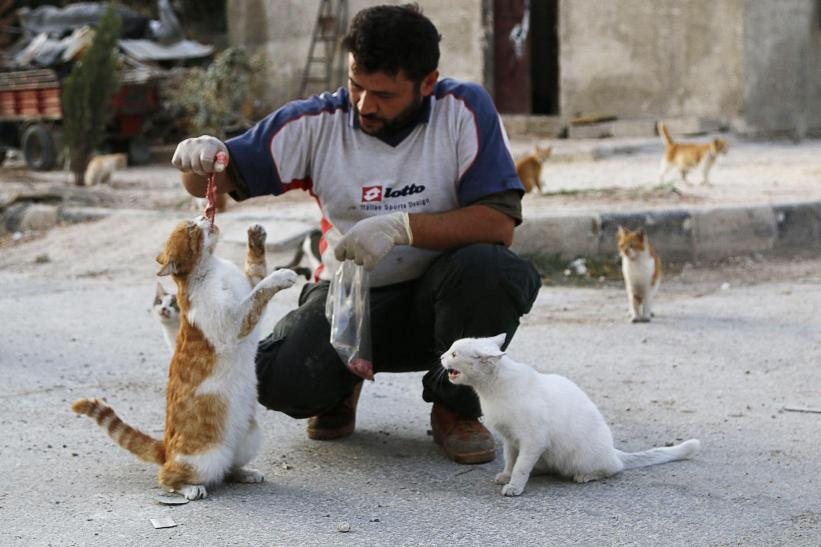 man-takes-care-of-cats-syria