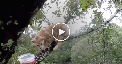 Poor Ginger Kitty Clinging To Tree Branches For The Past 3 Days In Pouring Rain, But Then…