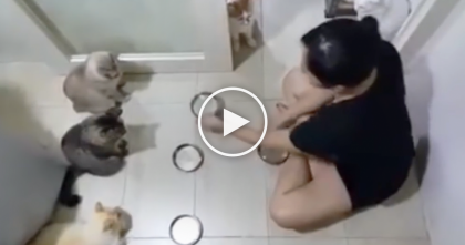 Cats Are Hungry For Dinner, But Keep Watching Till The End… I CAN'T Believe My Eyes, Omg!!