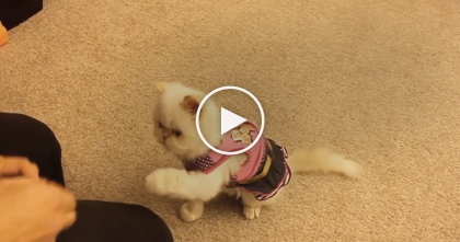 She's Teaching This Kitten Some Tricks, But WATCH How The Cat Is Responding… OMG, Wow!!