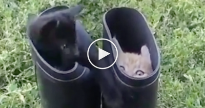 These Kittens Discover The Boots, But Their Reaction Is Just TOO Cute… OMG, Just Watch It!!
