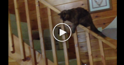 They Noticed Their Cat Jumped On The Banister, So They Started Recording… Oh. My. GOODNESS.