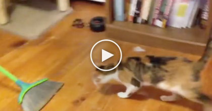 They're Trying To Sweep The Floor… Now Watch What The Cat Wants To Do, Omg…TOO Funny!!