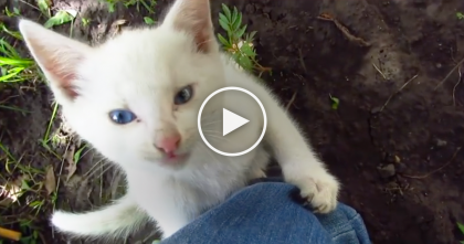 This Sweet White Kitten Just Couldn't Resist The Urge When He Sees Humans Leg… Just Watch!