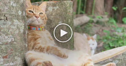 Watch What This Cat Does When He Sits Down To Relax… OMG, This Kitty Is TOO Funny, lol!!