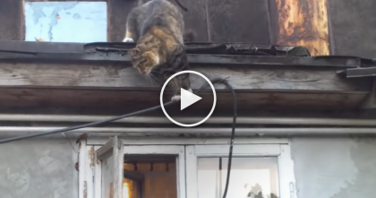 When This Cat Comes Home, You Won't Believe how He Gets Inside, Just Watch It… OMG!!