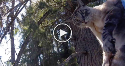 Cat Climbs Up MASSIVE Tree And Gets Trapped, But Then A Kind Human Notices… OMG.