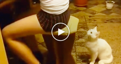 When This Cat Wants Attention, Just Watch What He Does To His Human… Oh My Goodness, LOL!!
