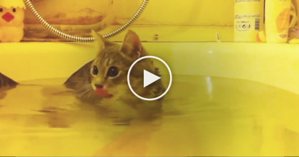 Cat Gets In Tub Of Water, But Just Watch His Reaction…Omg, This is Not What I Expected… LOL