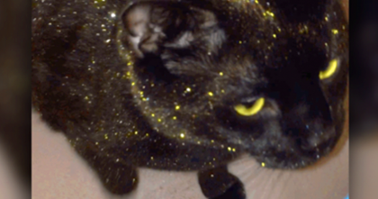 Cat Rolled In A Pile Of Glitter And The Results Are Totally Fabulous… OMG.
