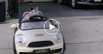 Cat Starts Driving The RC Car, But Just Watch How Amazing He Can Park…SOO Hilarious!!