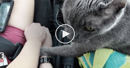 Cat Stops Purring, But When You Learn The Reason Why, It Will Break Your Heart To Pieces…