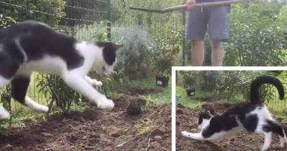Energetic Cat Turns Gardening Into A Game By Leaping Up And Grabbing Everything He Can..