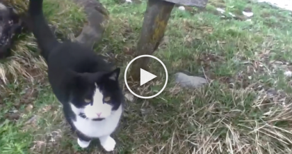 He Got Lost In The Alps, But When This Cat Noticed Him, Just Watch… This Is The Sweetest Thing Ever!!