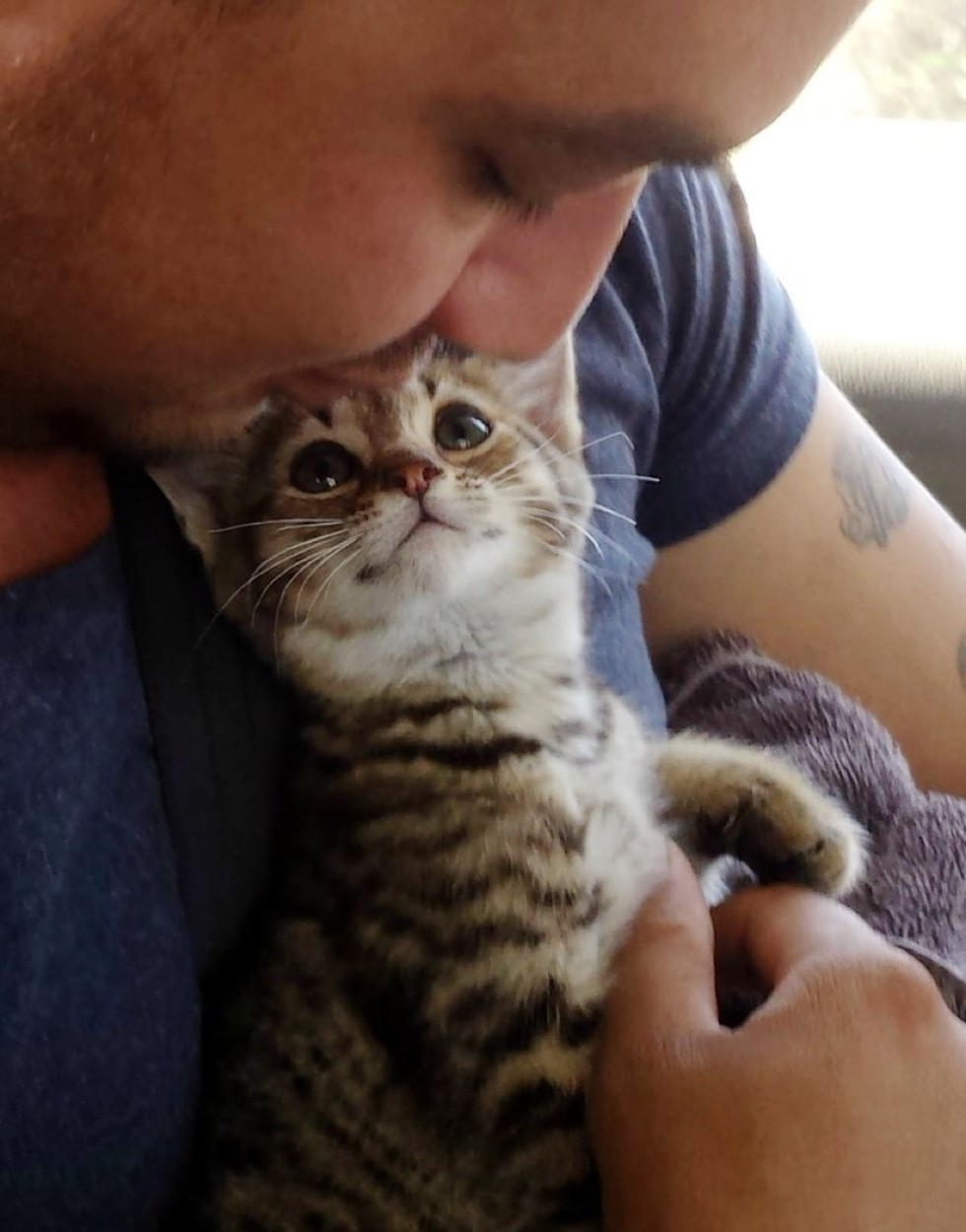 he-rescued-this-kitten-but-the-moment-kitten-realizes-hes-going-to-his-forever-home-sweetest-ever-2