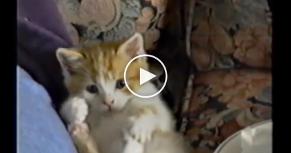 Kitten Giving Himself A Bath, But Then He Can't Help It… Keep Watching Till The End, It's Adorable!