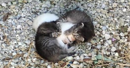 They Found These Kittens Wrapped Around Their Trembling Sister, Helping To Keep Her Safe
