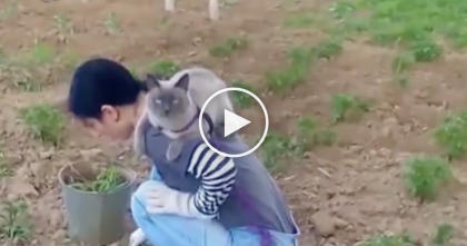 She Goes Outside To Do Gardening…But Watch What This Kitty Does Every Time, SOO CUTE.