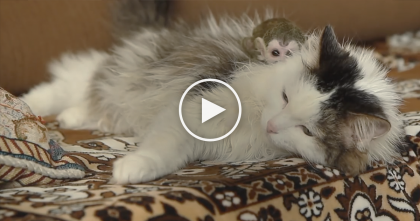 Monkey Rejected By His Mom, But Then… Now Watch What This Cat Does Next, OMG… Amazing!