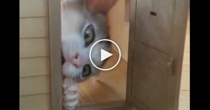 She Knocks On The Doll House Door, But When You See Kitten?? Most Adorable Little Surprise Ever… OMG!