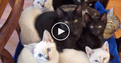 She Starts Meowing, But Then More Than 10 Stray Kittens Come Pouring Out Of The Bushes