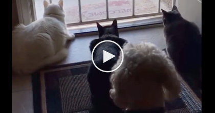 She Was Recording Her Cats Watching The Birds, But Then Doggie Walks Up… I CAN'T Stop Laughing!