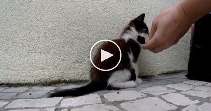 Stray Kitten Falls From Roof, Nearly Dies, But You've Gotta See The Results…Just Watch, Awwww!!