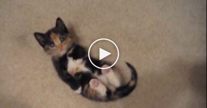 This Kitten Will Melt Your Heart In Just 20 Seconds, When You See How He Lays!  OMG, Awwww!!