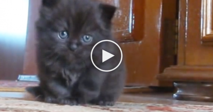 Tiny Little Kitten Says Hello To The Camera, But The Results Will MELT Your Heart… OMG, Too Cute!!
