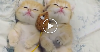 Two Tiny Little Kittens Fall Asleep Together, But Just Watch Their Paws… OMG, This Is Too Adorable!!