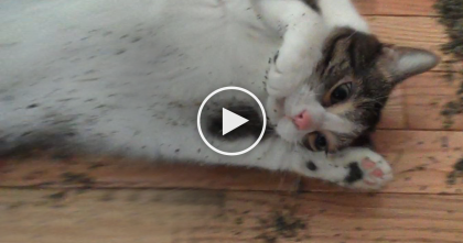 Cat Discovers Catnip In The Night, But Then His Owners Wake Up In The Morning And Discover… OMG!!
