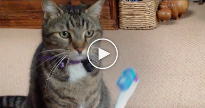 Cat Discovers Electric Toothbrush For The First Time, But After He Sniffs It then… LOL, This Is Soo Funny!