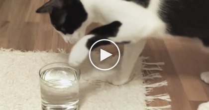 Cat Discovers Sparkling Water For The First Time, But Then Reacts In The Most Hilarious Way Ever… LOL