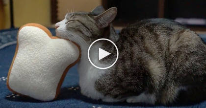 Cat Gets Tired, But When His Owner Notices What He's Doing, It's The CUTEST Thing Ever… Just Watch!