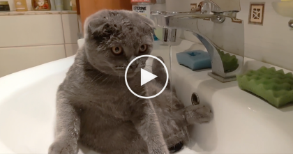 Cat Jumps Inside The Sink, But Then His Owners Start Recording… It's The Funniest Thing, Cracks Me Up!