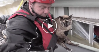 Cat Was Found Floating In His Litter Box, After Huge Flood… Watch the AMAZING Rescue!