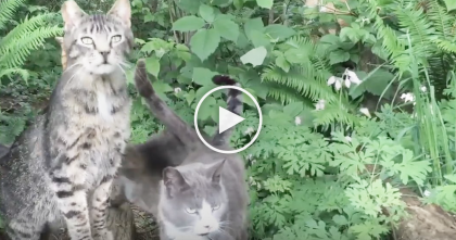 Feral Cat Is Reunited With His Best Friend, But The Moment They're Together, Just Melted My Heart…