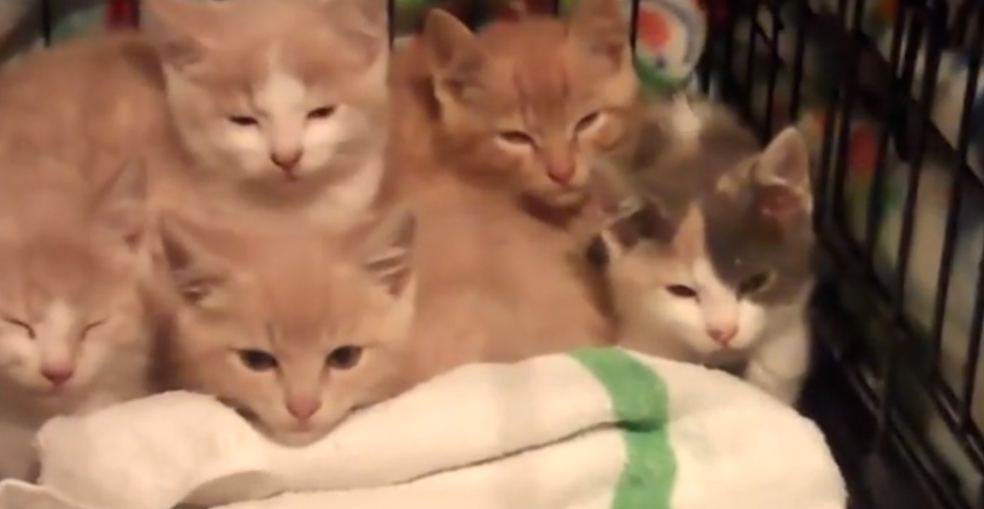 feral-kittens-are-rescued-after-something-horrible-happened-to-mom-but-now-this-is-wonderful-very-touching