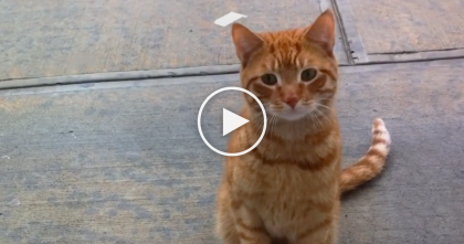 "He Noticed A Stray Cat Outside His Door, But Couldn't Say ""NO,"" Moments Later… Just Watch, AMAZING!!"