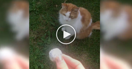 He Throws A Ball Of Tin Foil, But Keep Watching For The Reaction… This Cat Is Hilarious, OMG!!