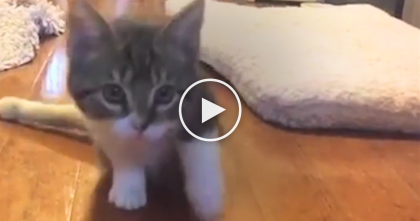 Kitten Can't Walk, Has Broken Legs, But Watch What Big Brother Is Doing… This Melted My Heart.